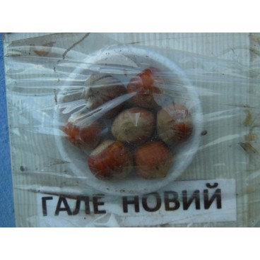 Саженцы фундука Олбриджский из Гале