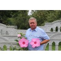 Розовый гигант